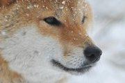 日本犬保存会とは その活動を知っていますか?