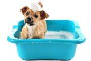 犬のトリミングサロンでよくある「マイクロバブル」とは?