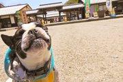 「犬は人間並みの記憶力」私達が思うより犬の記憶力が良かった!