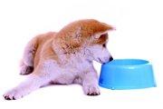 秋田犬の平均体重と年齢による管理について