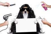 犬にも泥パックが使える?効果や方法、注意点