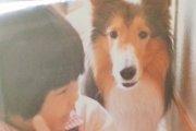 「わたしは犬が大好きです」幼い私を守ってくれた愛犬