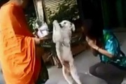 信心深い?!飼い主と一緒に僧侶に手を合わせるワンコ