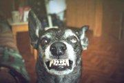狂犬病にかかると現れる症状について