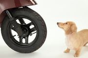 愛犬が交通事故に遭ったときの対応はどうすればいい?