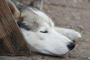 迷い犬の保護。優しさだけでは難しい現実