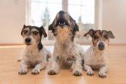 犬の騒音対策3つ!近所に迷惑をかけない飼い方を心がけよう