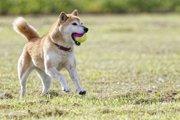 犬と楽しめる関東の公園7選