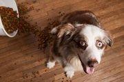 犬が人間の手からしかご飯を食べなくなる3つの原因と解決法