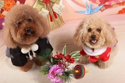 クリスマス、お正月、ハロウィン…愛犬にコスチュームを着せる前に覚えておきたいこと