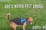 感じたことのない気持ち♪保護犬たちの幸せな初めての瞬間