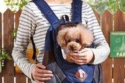 犬用リュックのキャリーバッグを活用しよう!今人気のわんこを背負える便利用品