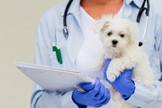 犬の健康診断の頻度はどのくらいがベスト?適切なタイミングから必要性まで