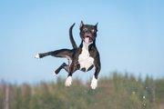 犬がはしゃぎすぎてしまう3つの理由とその対処法