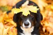 油断は禁物!秋こそ気を付けたい愛犬の健康管理