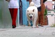 毎朝大好きな飼い主とお散歩した道を飼い主亡き後も散歩する犬