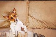 犬の脳梗塞の症状や原因、治療法から予防法まで