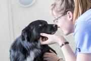 獣医師を目指す学生がホームレスの愛犬を無償で診療するプロジェクト