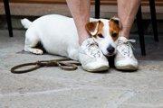 犬のビビり癖は克服できない!?大事なのは「見極め」と「理解」