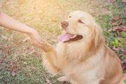 どうして犬は人間に懐くのか?