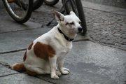 犬の『お尻歩き』を見逃さないで!考えられる病気と対策法