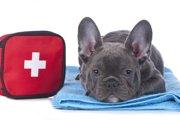 犬のリンパ腫の正しい知識~症状・原因から治療法まで~