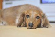 『寒い時期こそ要注意!』犬のぎっくり腰の知識と予防法まとめ