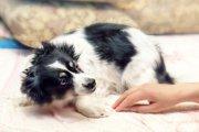 犬の怖がりと問題行動と健康の関係