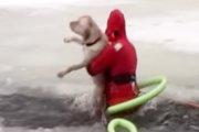 すぐ助けてやる!真冬の湖に落ちてしまった犬をレスキューした男たち