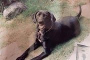 老犬介護の実情について