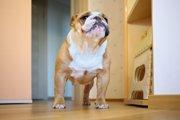 愛犬が部屋の中でクンクン匂いを嗅ぐ4つの理由