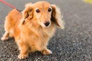 夏の散歩で犬の肉球が火傷する?知っておきたい対策