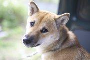 犬のマイクロチップの必要性について考える