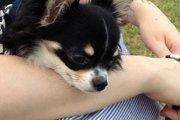 ラディカは犬用キャリーバッグのおすすめグッズ!災害の備えにも