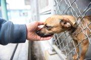 殺処分有りのシェルターに収容された犬猫達を写真で救う男性がいる!
