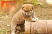 柴犬の匂いのケア方法 原因を知って上手に対策