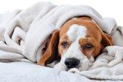 2017年度版・愛犬のストレスチェック12項目