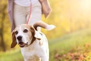飼い主の指示する方向に行かない!お散歩中に言う事を聞かなかった愛犬