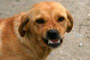 愛犬が威嚇してくる理由とその対処法