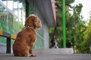 愛犬をお店の外に繋いで待たせておく危険性や注意点