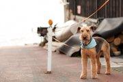 犬の盗難について あなたの愛犬が狙われている!