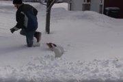 【短足胴長の宿命】思わず応援したくなる!雪の中を一生懸命進むコーギー