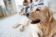 犬を混乱させないために家庭のルールを決めよう