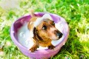 犬のトリミングの頻度はどれくらい?適切な時期とカットの必要性