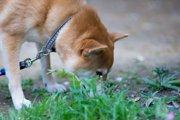 除草剤が犬に与える影響と危険性!お散歩時にも要注意