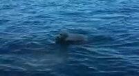 グッドボーイ!!溺れる子鹿を救出した勇敢なワンコ