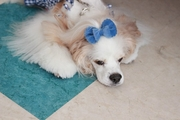 老犬のてんかんの症状と適切な対処法は?
