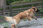 大型犬は大変じゃない!?優しい性格でセラピードッグに・防犯にも!