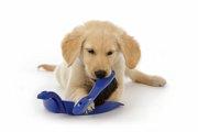 子犬の噛み癖をなおすしつけ方について