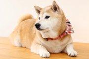 犬がトイレをするときによく見せる5つの行動